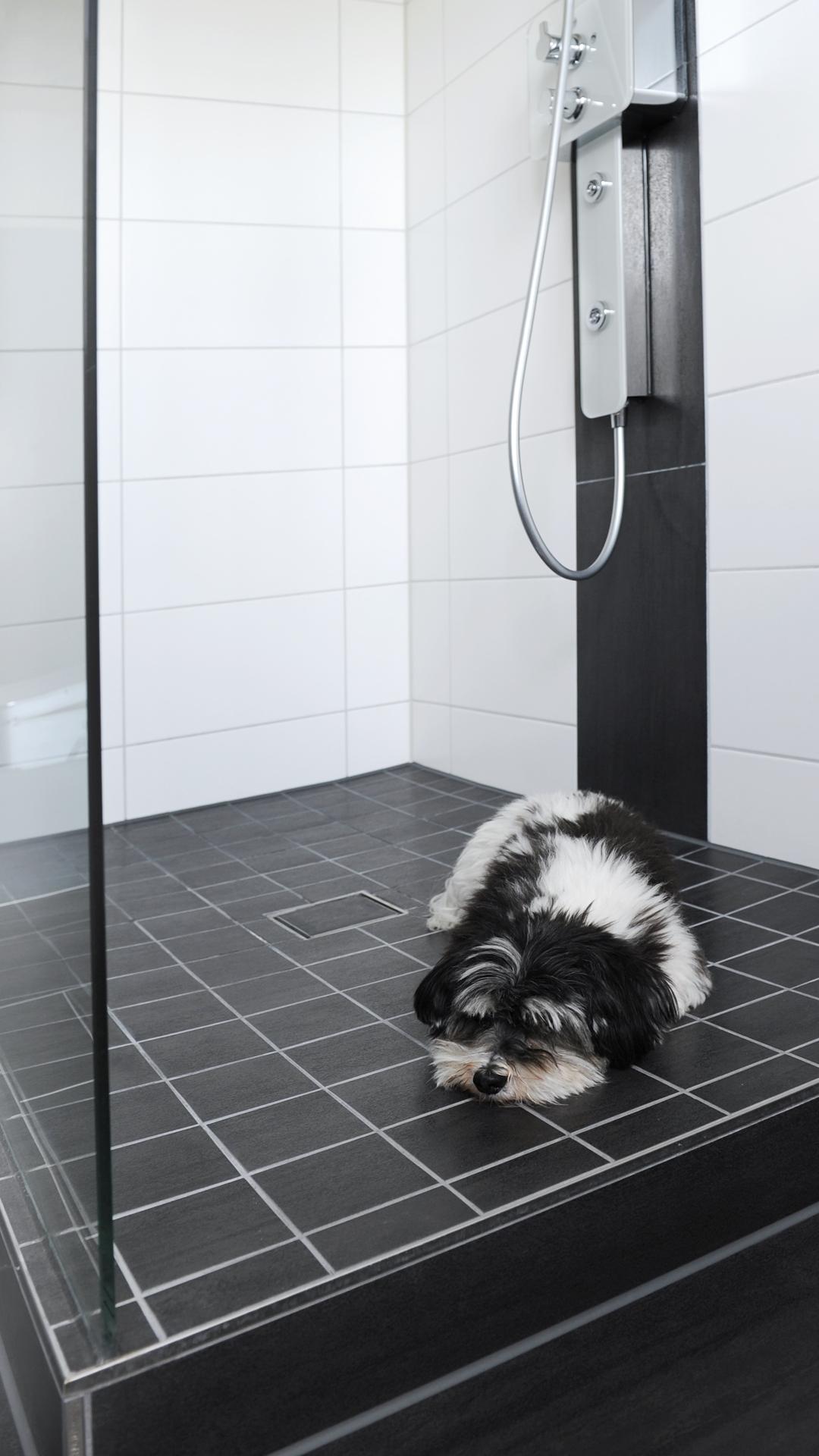 Hund liegt entspannt in der Dusche